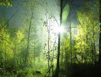 Urban jungle, liście i złoto będą rządziły we wnętrzach