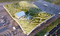 """Urban farming"" w praktyce"