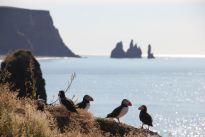Islandia obawia się kolejnej bańki na rynku nieruchomości