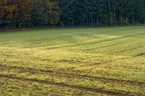 Zadania Agencji Nieruchomości Rolnych od 2016 r. mogą się zmienić