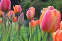 Wiosna nadchodzi