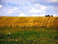 Wielokrotna sprzedaż gruntu a podatek VAT