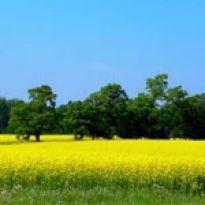 Ziemia rolnicza drożeje w rekordowym  tempie
